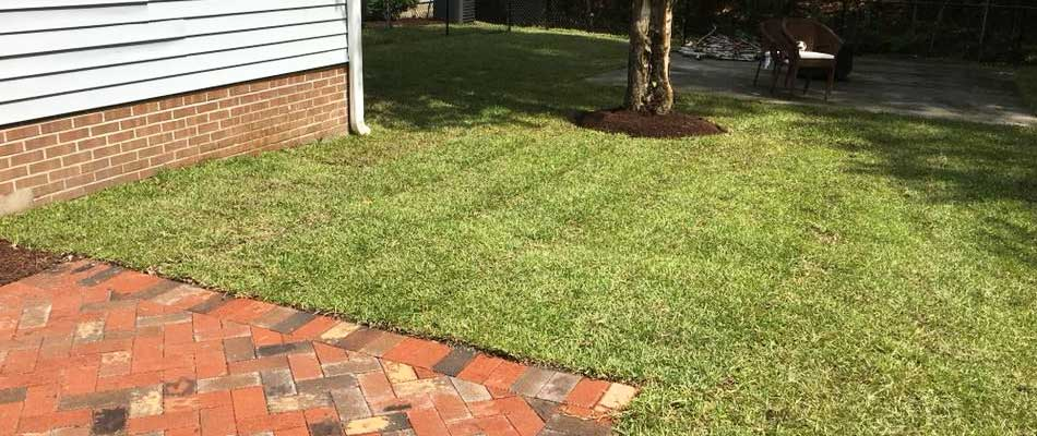 A recently mowed residential lawn in Morehead City, NC.