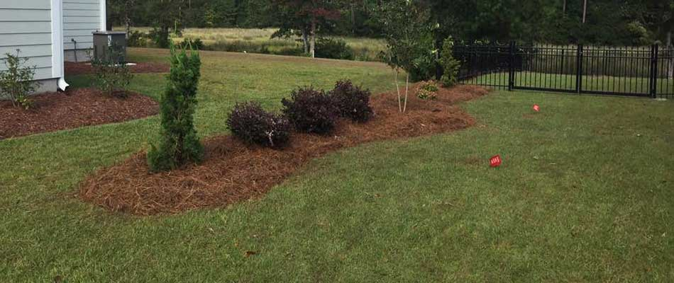 New landscaping installation that includes new plants, shrubs, and mulch.