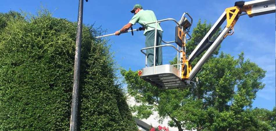 A large over grown bush being trimmed by our team at a home in Morehead City.