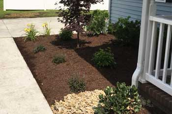 Morehead City home with recently planted shrubs and flowers in a landscaping bed.