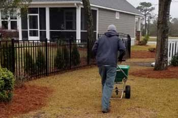 Our employee spreading fertilizer at a home in Atlantic Beach, NC.